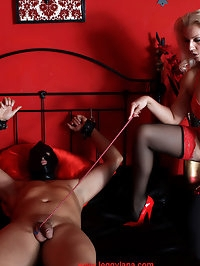Lana has her slave tied up and she is sucking his dick hard